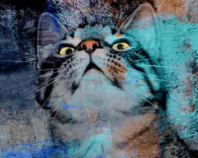 Feline Focus Poster by Kathy M Krause