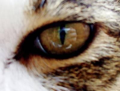 Feline Frenzy Poster