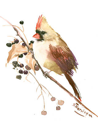 Female Cardinal Bird Poster
