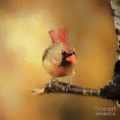 Poster featuring the photograph Female Cardinal Excited For Spring by Darren Fisher