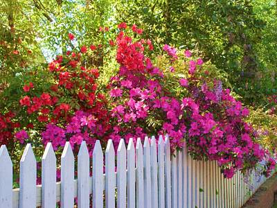 Fence Of Beauty Poster by Jeanette Oberholtzer