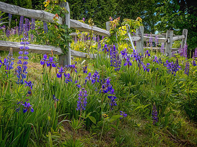 Fence With Lupine And Irises Poster by Diane Moore