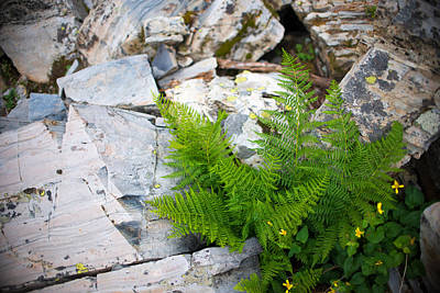 Fern Among Glacial Rock Poster