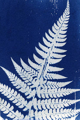 Fern Poster by Elspeth Ross