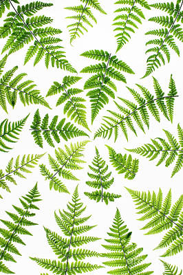 Fern Fronds Poster by Tim Gainey