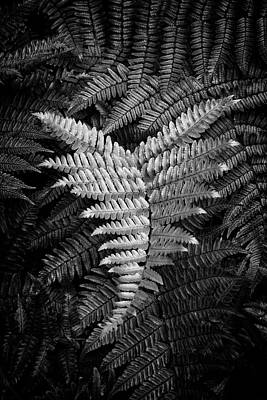 Fern In Black And White Poster