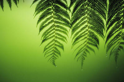 Fern On Green Poster by Ron Dahlquist - Printscapes