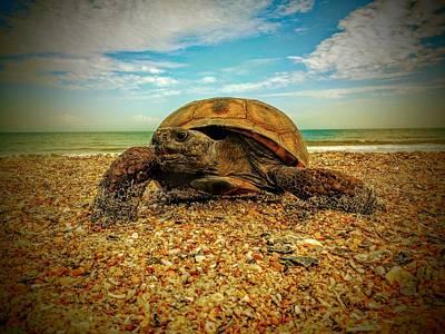 Fernandina Beach Turtle Poster