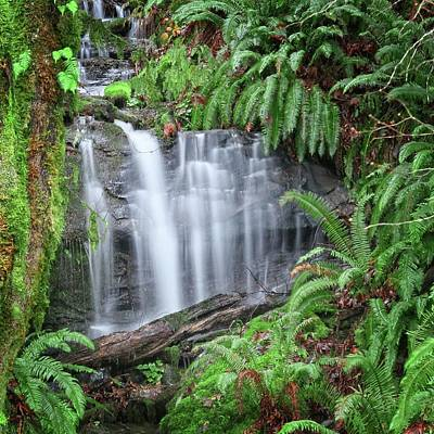 Ferns And Waterfalls Poster