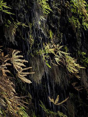 Ferns Below Falls By Jean Noren Poster by Jean Noren