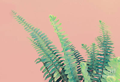 Ferns On Pink Poster