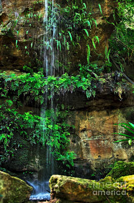 Ferns Under A Waterfall Poster by Kaye Menner