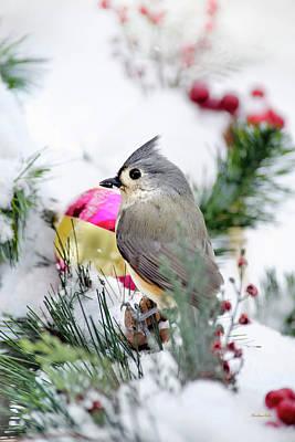 Festive Titmouse Bird Poster