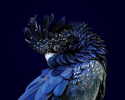 Fibonacci Cockatoo Poster