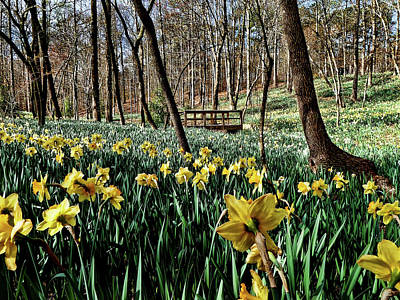 Field Of Daffodils Poster by Elijah Knight
