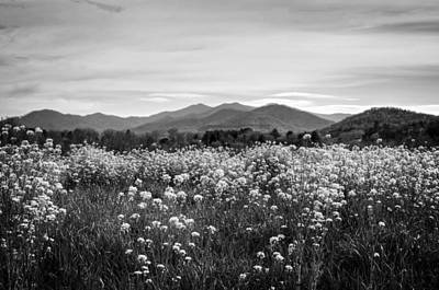 Field Of Flowers In Black And White Poster