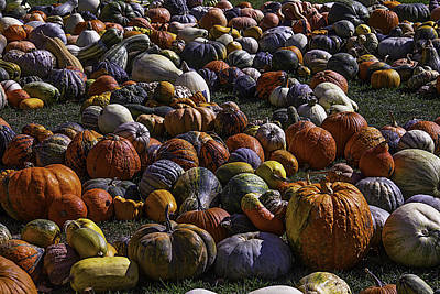 Field Of Pumpkins And Gourds Poster by Garry Gay