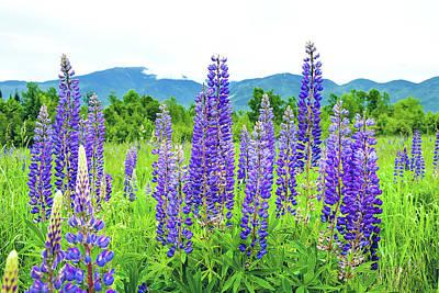 Field Of Purple Poster by Greg Fortier