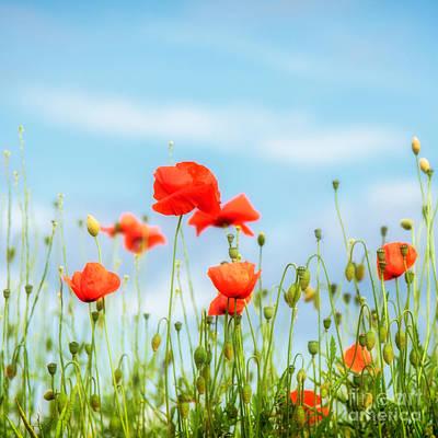 Field Poppies Poster by Janet Burdon