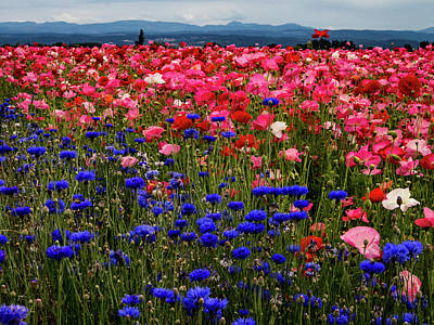 Fields Of Flowers Poster