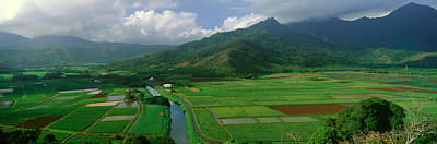 Fields Of Taro, Hanalei Valley Poster by Panoramic Images