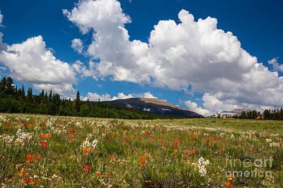 Fields Of Wildflowers Poster