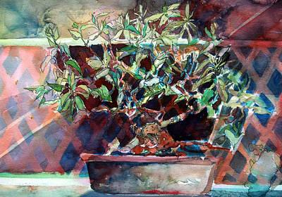 Fig Bonsai Tree Poster