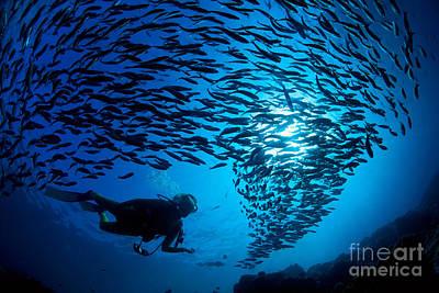 Fiji, Galapagos Islands Poster