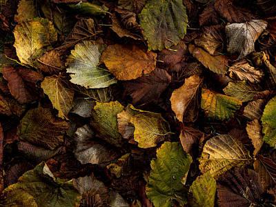 Filbert Leaf Pattern Poster by Jean Noren