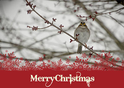 Finch Christmas Poster by Trish Tritz