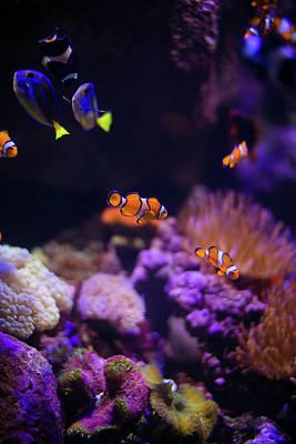 Finding Nemo And Dory 2 Poster by Ariane Moshayedi