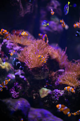 Finding Nemo And Dory 4 Poster by Ariane Moshayedi