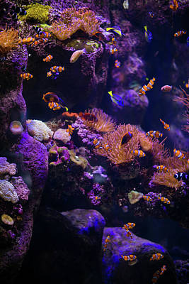 Finding Nemo And Dory 5 Poster by Ariane Moshayedi