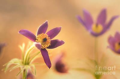 Fine Flower In Detail Poster by Tanja Riedel