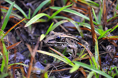 Poster featuring the photograph Fine Frog by Al Powell Photography USA