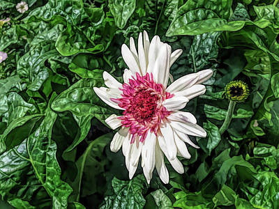 Fine Wine Cafe Gerbera Daisy And Bud Poster
