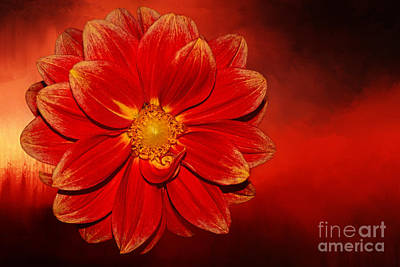 Fire Dahlia By Kaye Menner Poster by Kaye Menner
