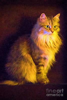 Fireside Feline Poster