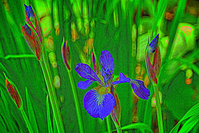 First Iris To Bloom Poster by Dennis Lundell
