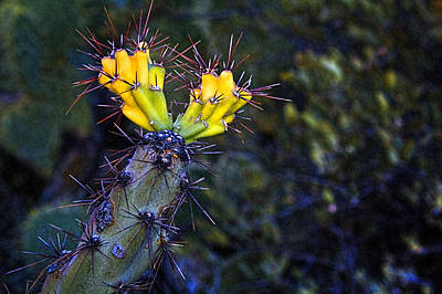 First Signs Of Spring On The Sonoran Desert Poster