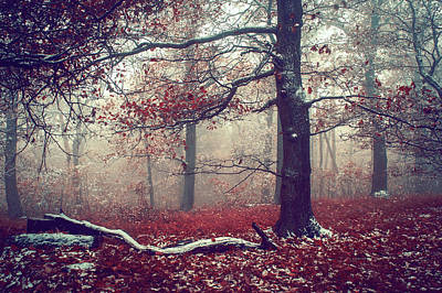 First Snow In Fall Woods Poster by Jenny Rainbow