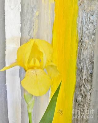 First Yellow Iris Poster by Marsha Heiken