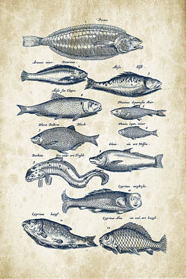 Fish Species Historiae Naturalis 08 - 1657 - 27 Poster by Aged Pixel