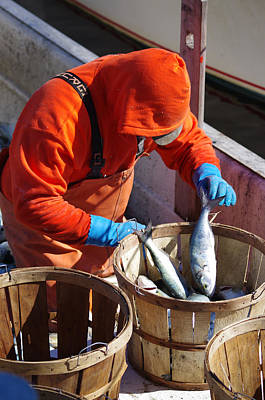 Fisherman Sorting His Catch Poster