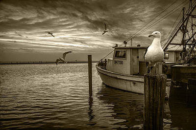 Fishing Boat And Gulls In Sepia Tone Poster