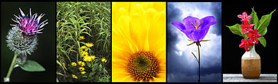 Five Flower Composite Poster by Donald  Erickson