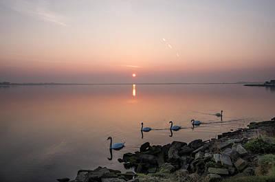 Five Swans At Dawn Poster