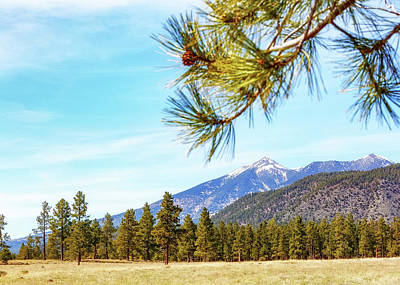 Flagstaff Arizona Mountains And Pine Trees Poster by Susan Schmitz