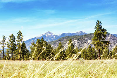 Flagstaff Field With Pines And Mountains Poster