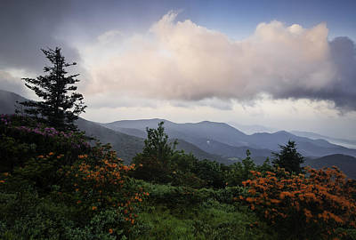 Flame And Flowers Poster by Rob Travis
